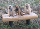 3 dogs on bench