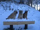 3 dogs on snowy bench