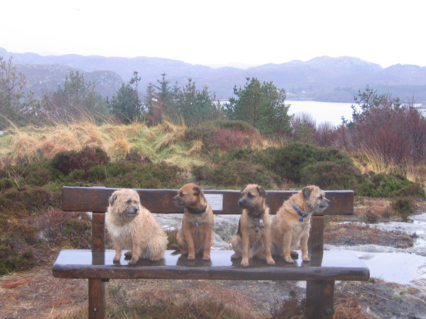 4 dogs above Gairloch